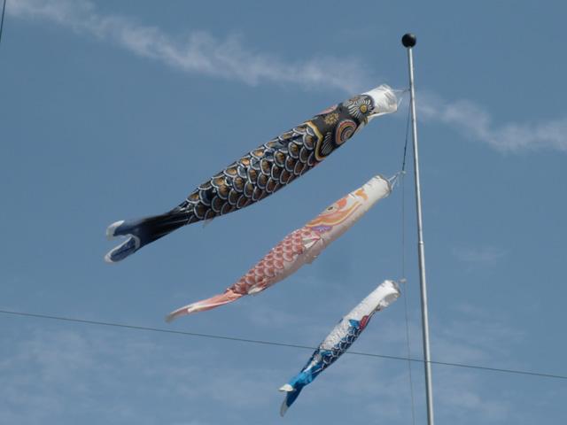 koinobori-katsura-nishi